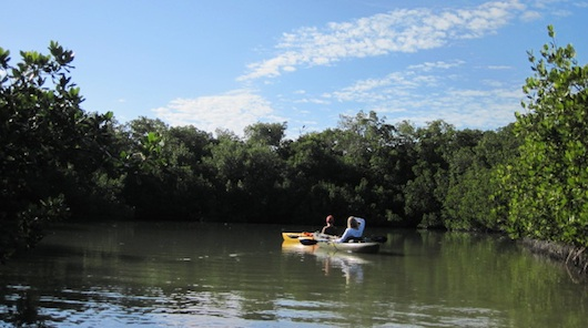 Kayaking in Naples Florida