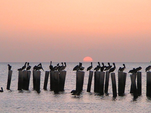 Pelicans Watch Sunset in Naples