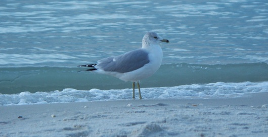 Seagull on the beach while I went to Turtle Club